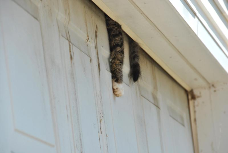 The Gross Pointe Woods Hoarding Case Mid Michigan Cat Rescue Blog